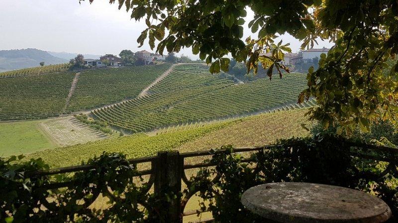 viaggio in Italia fra cibo e vino: il tartufo e le Langhe in Piemonte