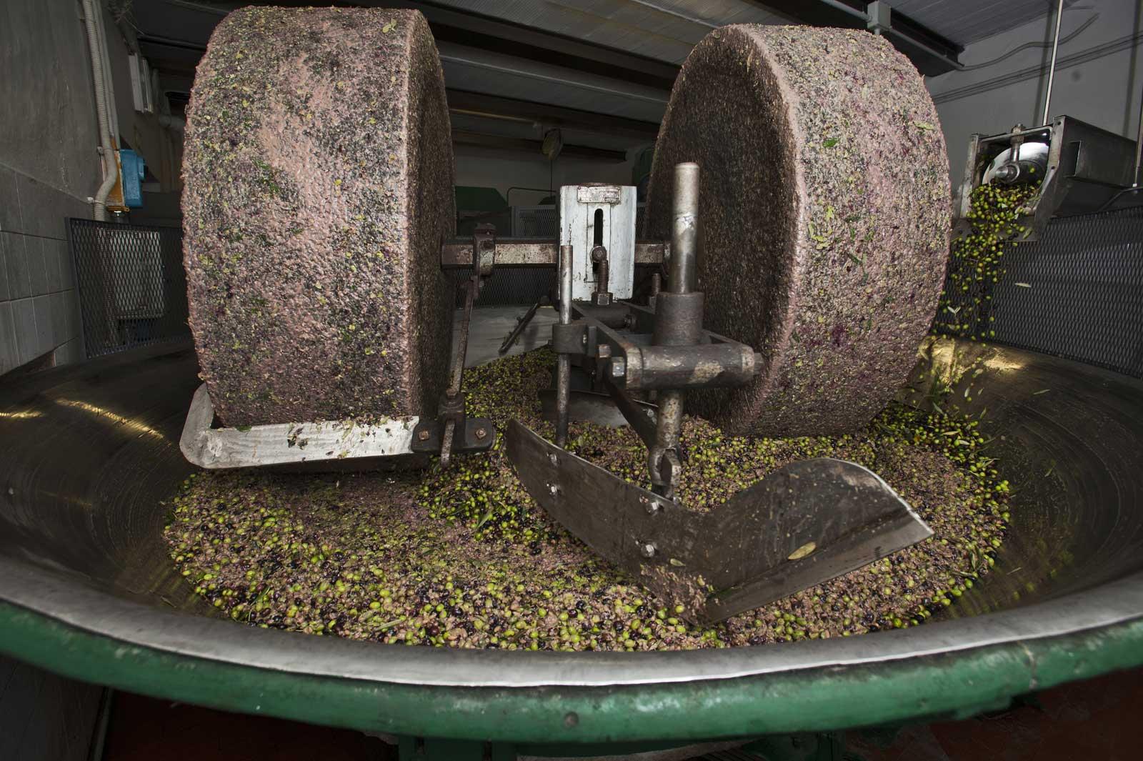 Degustazione guidata di olio in frantoio: percorso enogastronomico