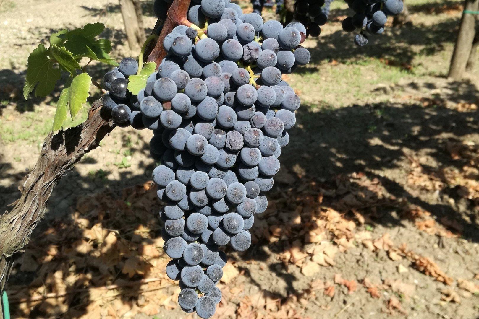 A Gragnano, fra vino e archeologia